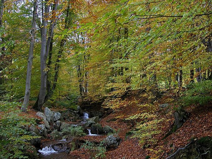 Spa : forêt